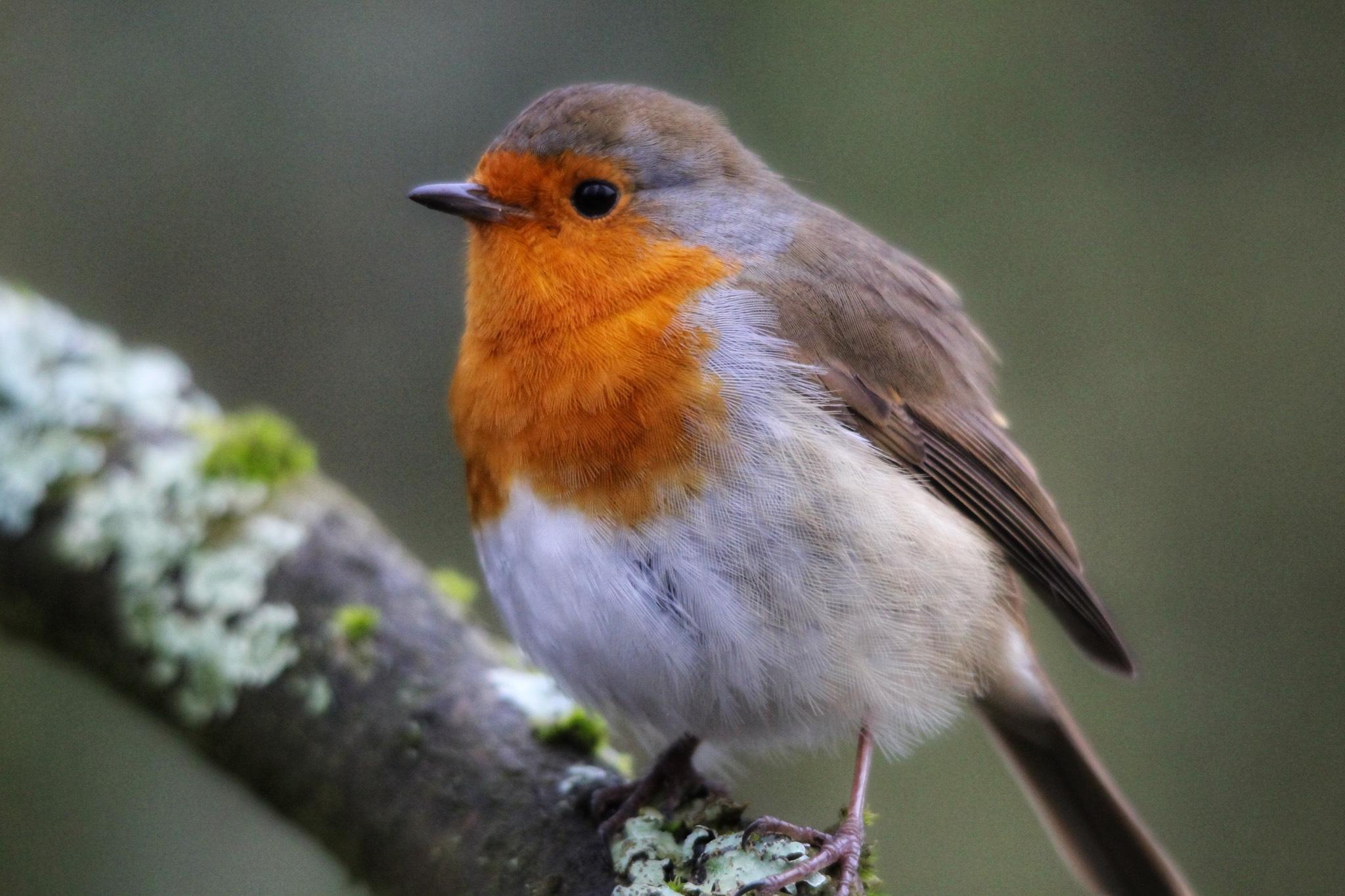 Hammond Vets Wild Birds.jpg