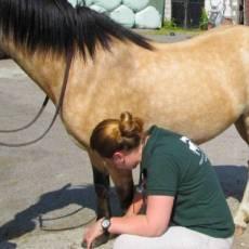 hammond-equine-vets-2.jpg