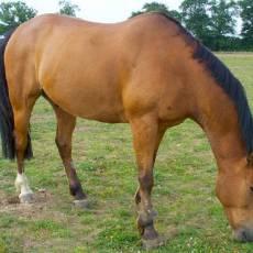 hammond-equine-vets-3.jpg